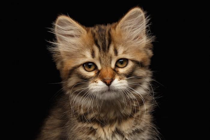 悲しい表情の猫