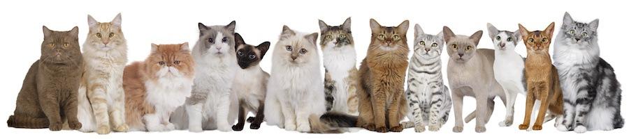 たくさんの種類の猫たち