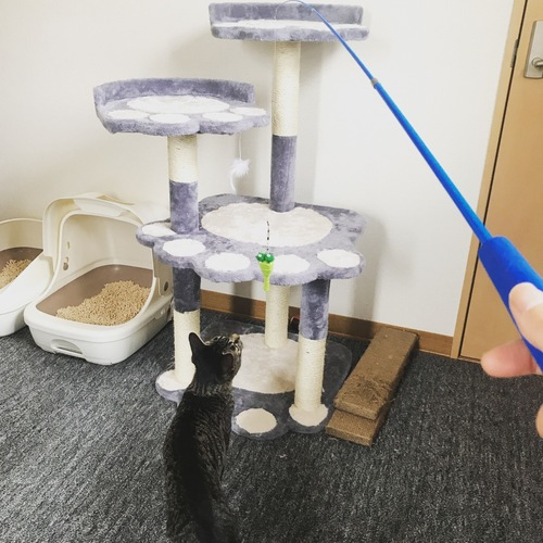 釣竿をみつめる猫