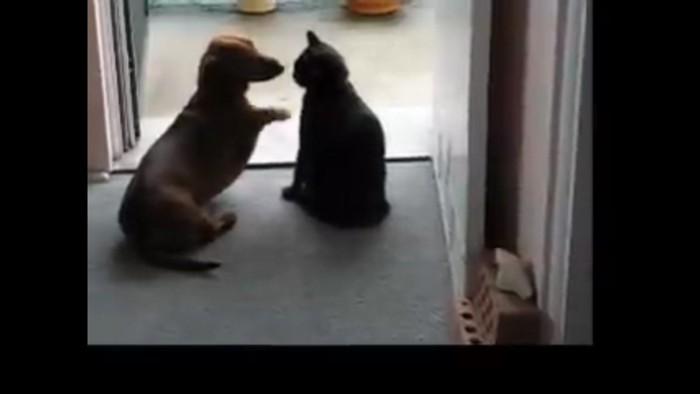 ひたすらちょっかいをかける犬