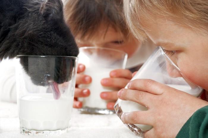 牛乳を飲む子供たちと黒猫