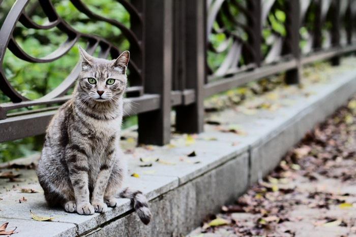 橋に座った猫