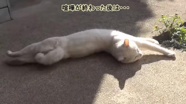 地面で伸びる猫