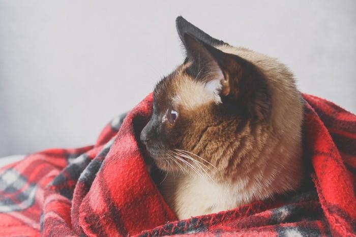 ケットにくるまれた猫
