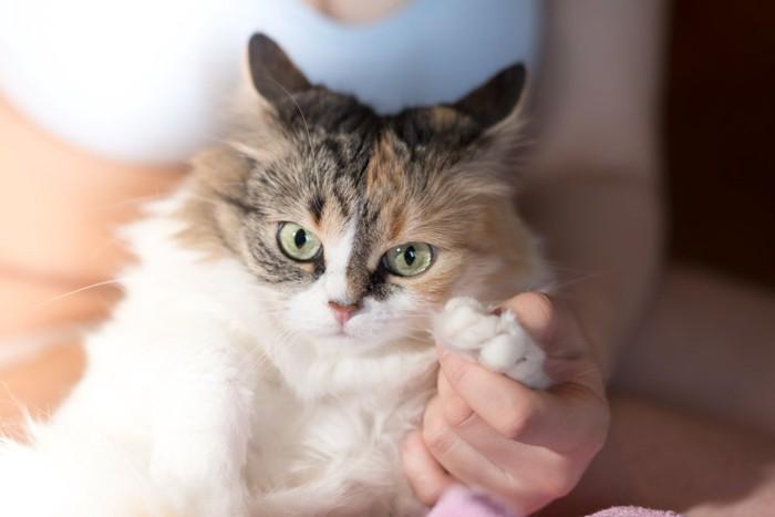 ビックリした顔の猫