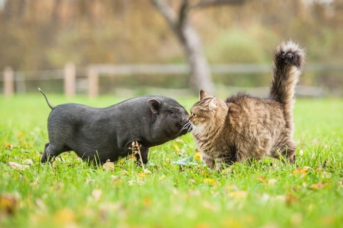 他の動物を嗅ぐ猫
