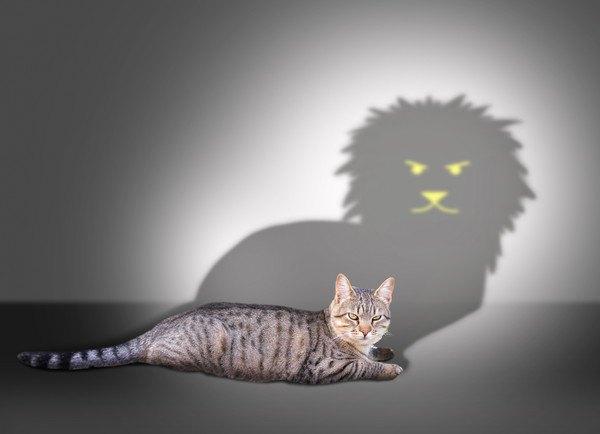 ライオンの影とキジ猫