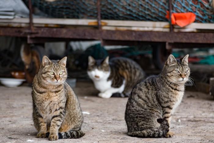 143319867 野良猫たち