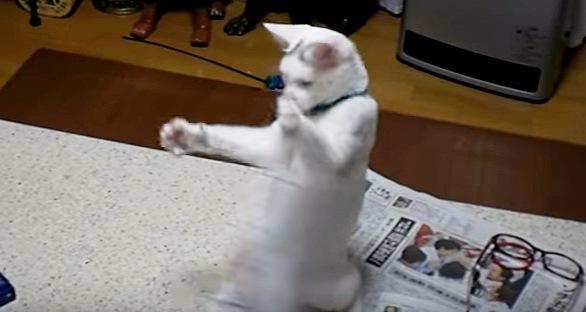 立って前足を構える猫