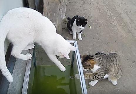 水槽の中の何かを見つけた猫たち