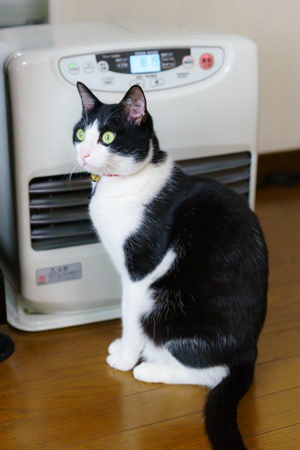 ヒーター前の黒白の猫