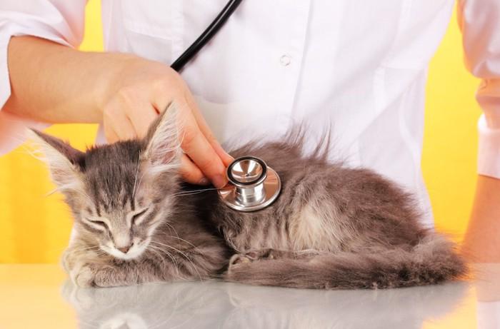 獣医師に診察される子猫