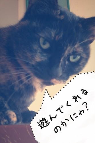 こちらを見て様子を伺っている猫