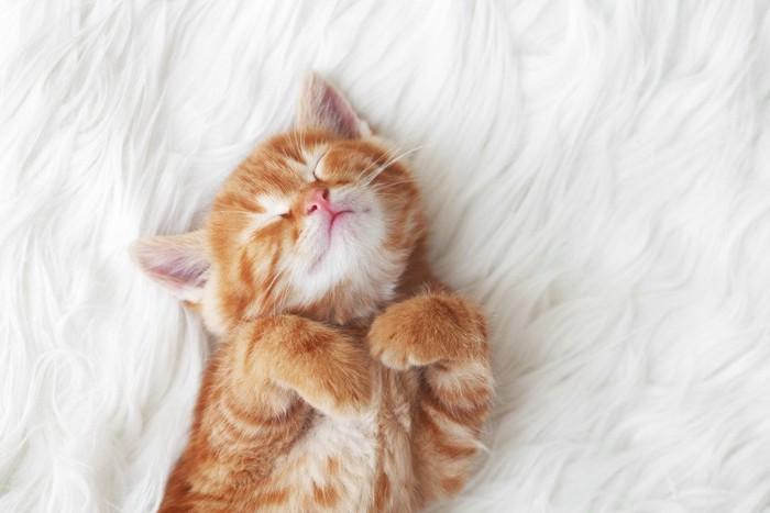 ふわふわの毛布で寝る猫