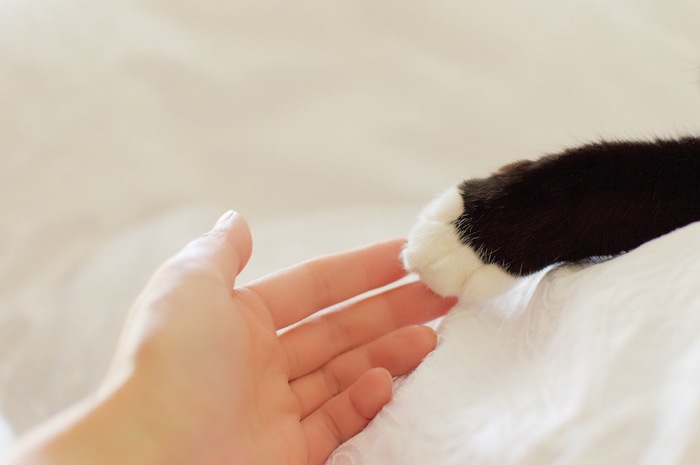 猫の手に手を伸ばす人の手