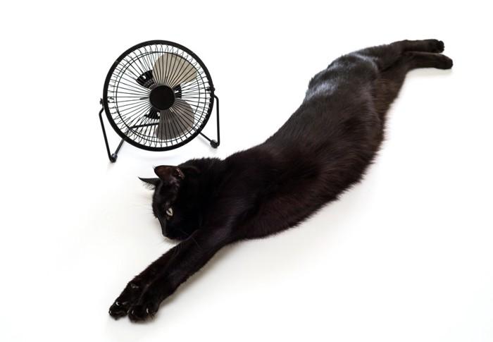 扇風機前で体を伸ばす黒猫