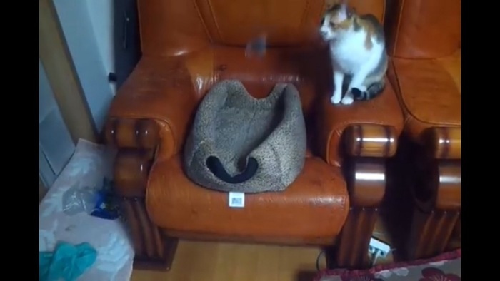 釣り竿で遊ぶ猫