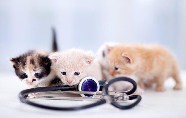 3匹の子猫と聴診器