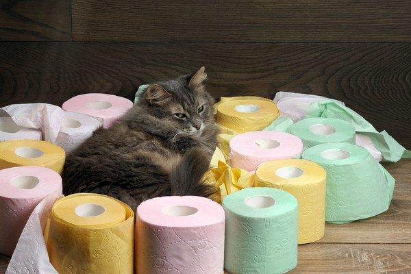 猫とトイレットペーパー