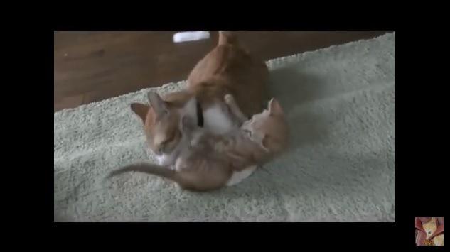 子猫のお尻を舐めてあげる成猫