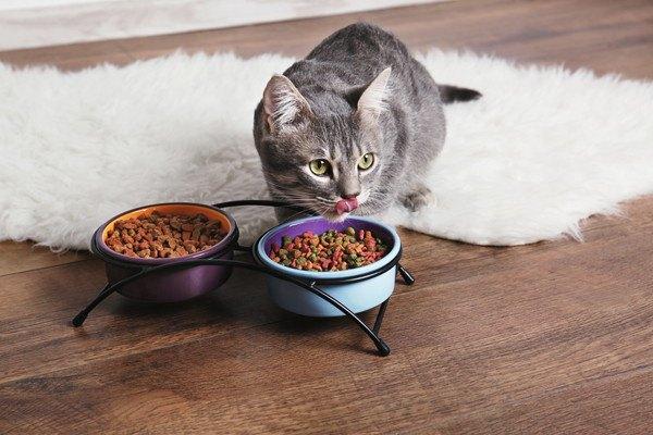 床の上で食事する猫