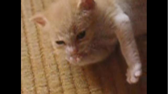 手をなめる子猫