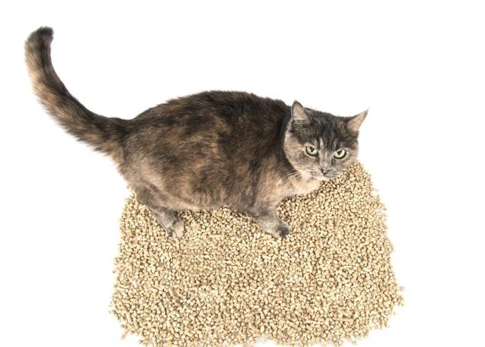 猫砂を隠す猫