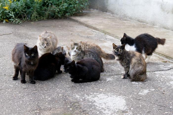 道路にいる複数の猫