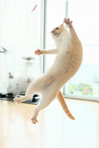 踊るチャコちゃん5