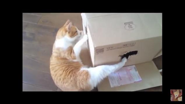 箱をのぞき込む1匹の猫