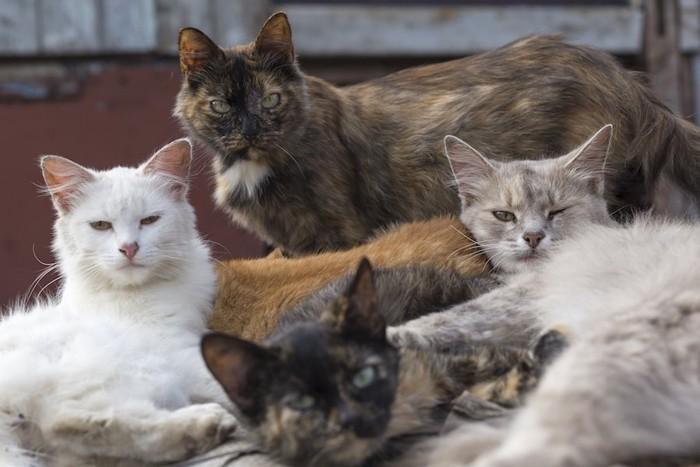 寄り添って暮らす野良猫たち