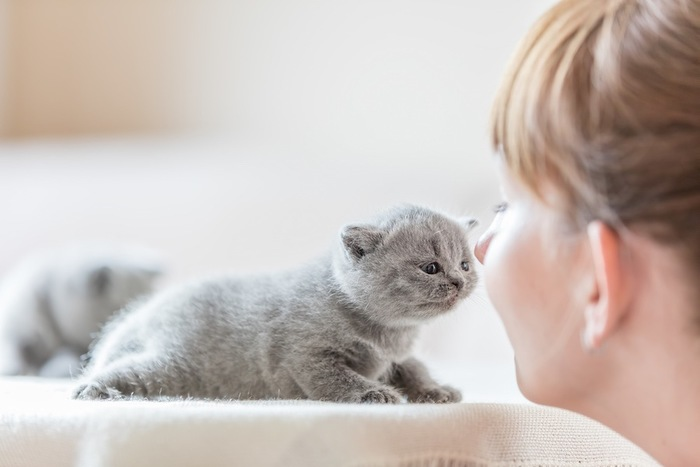 子猫と挨拶する女性