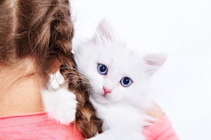 少女に抱かれたふわふわの白猫