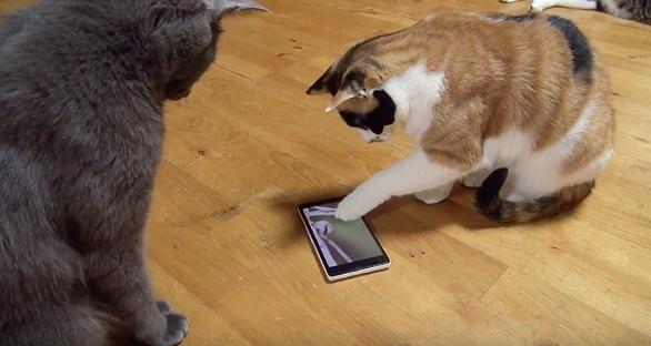 楽々スマホを操作する三毛猫