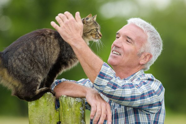 高齢者の男性に撫でられる猫