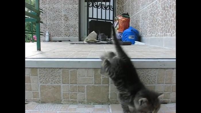 階段を降りる猫