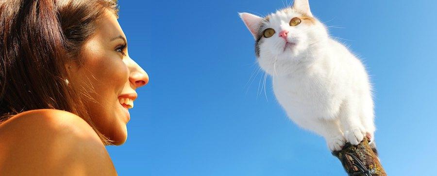 青空と木に乗る猫と女性