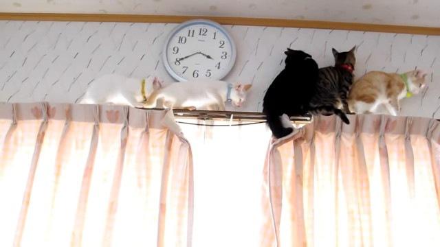 バックを始める先頭猫
