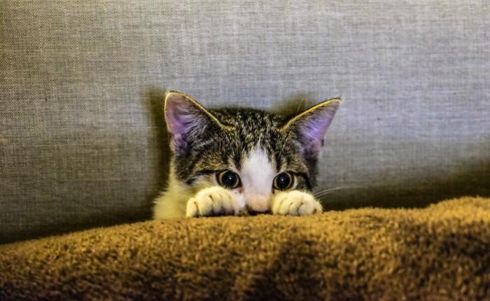 夜鳴きがうるさい猫