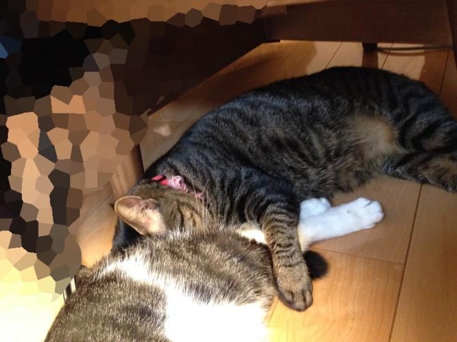 嗅ぎながら寝た猫