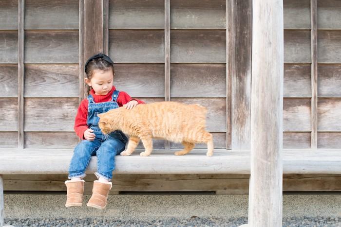 茶トラ猫を撫でる子供