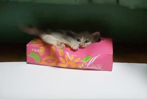 思ったよりも箱が深くて沈む子猫