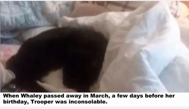 ベッドの上に居る猫