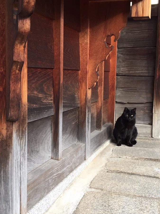 お寺の敷地でくつろぐ黒猫