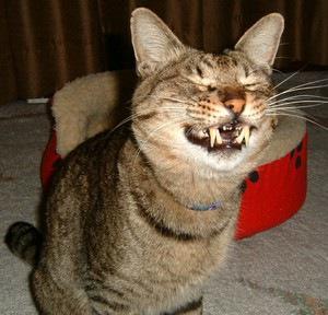 猫の変顔7