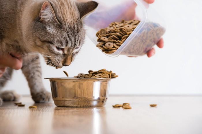 餌をもらう猫