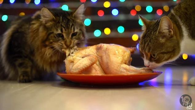 チキンを頬張る猫と匂いを嗅ぐ猫