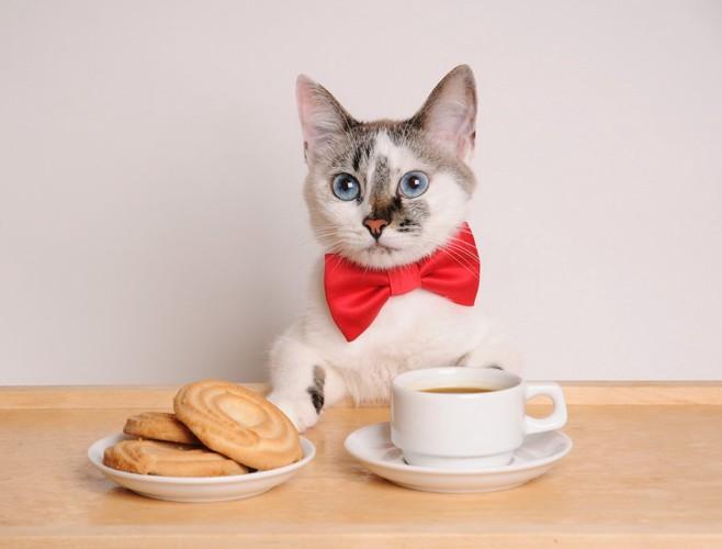コーヒーとクッキーと猫