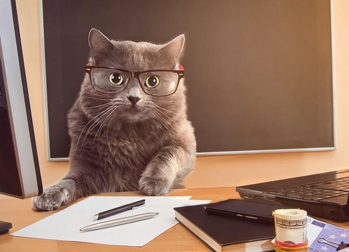 猫とオフィス
