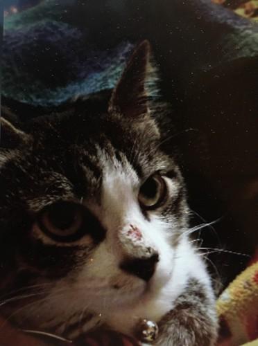 白癬にかかった猫